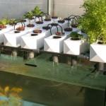 Aquaponics in Armenia